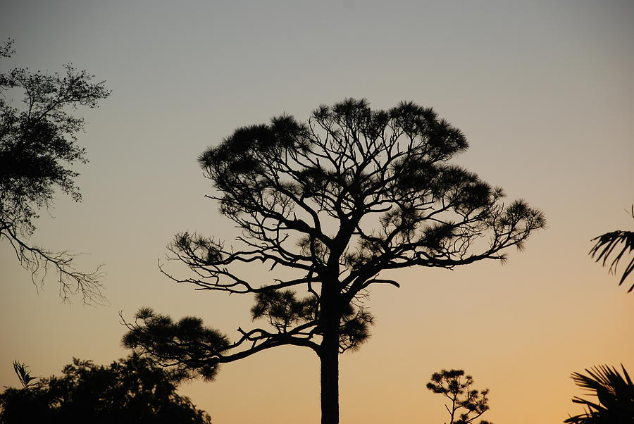 Tree Photograph - Sunsetting Thru The Trees by Rob Hans