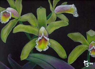 Orchid Drawing - Sunseual Orchids by Matt Jameson