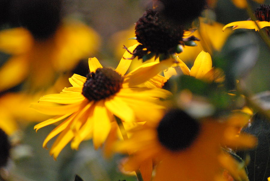 Flowers Photograph - Sunshine And Daisies by Trudi Southerland