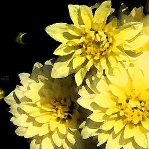 Mums Digital Art - Sunshine And Shadow 1 by Patti Gettinger