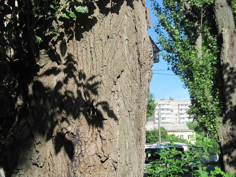 Sunshine Photograph - Sunshine And Shadow On The Old Tree by Kostyantyn Serodkin