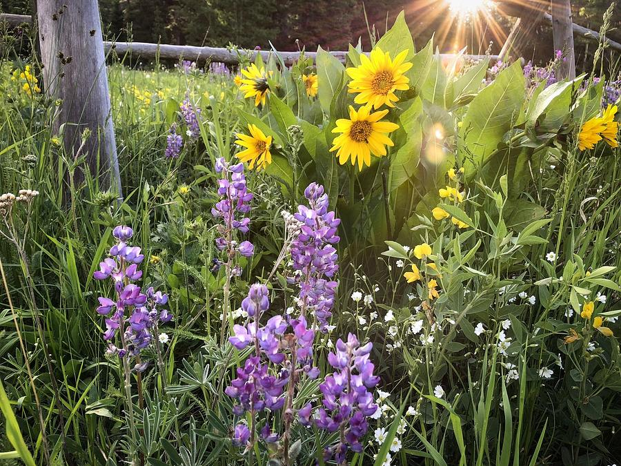 Sunshine and Wildflowers by Diane Mintle