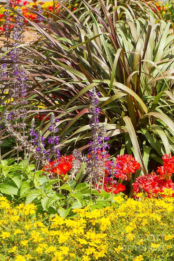 Sunshine Garden Photograph by Marilyn Cornwell