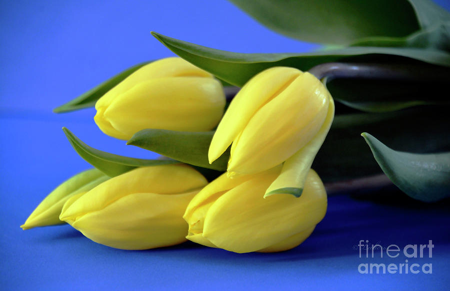Tulips Photograph - Sunshine Tulips  by Norma A Lahens