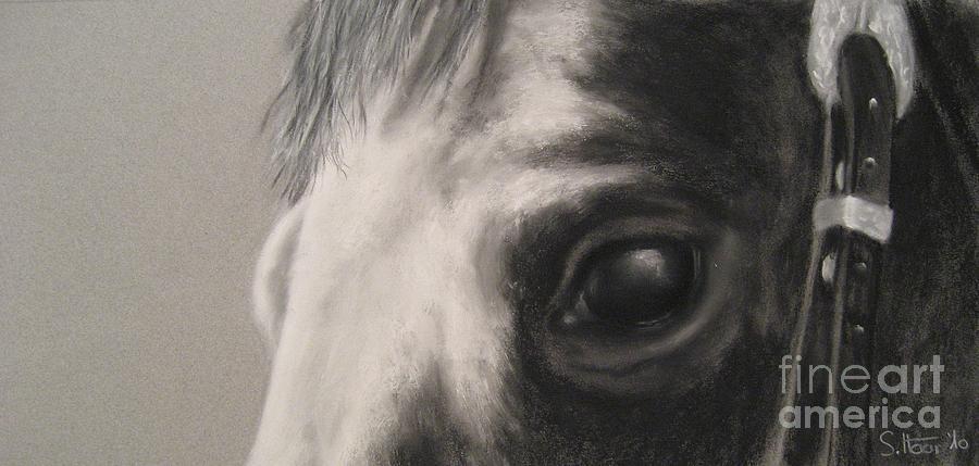Horses Drawing - Sunshine Queenie I by Sabina Haas