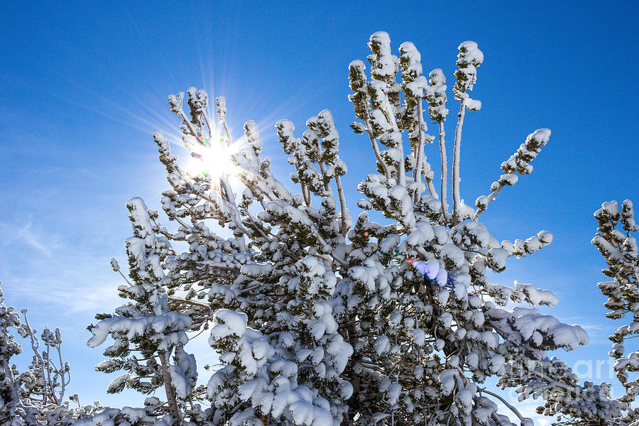 Sunshine Photograph - Sunshine Through Snow Covered Tree by G Matthew Laughton