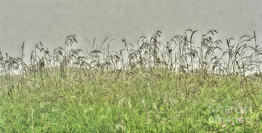 Meadow Photograph - Suntigweid by DiFigiano Photography