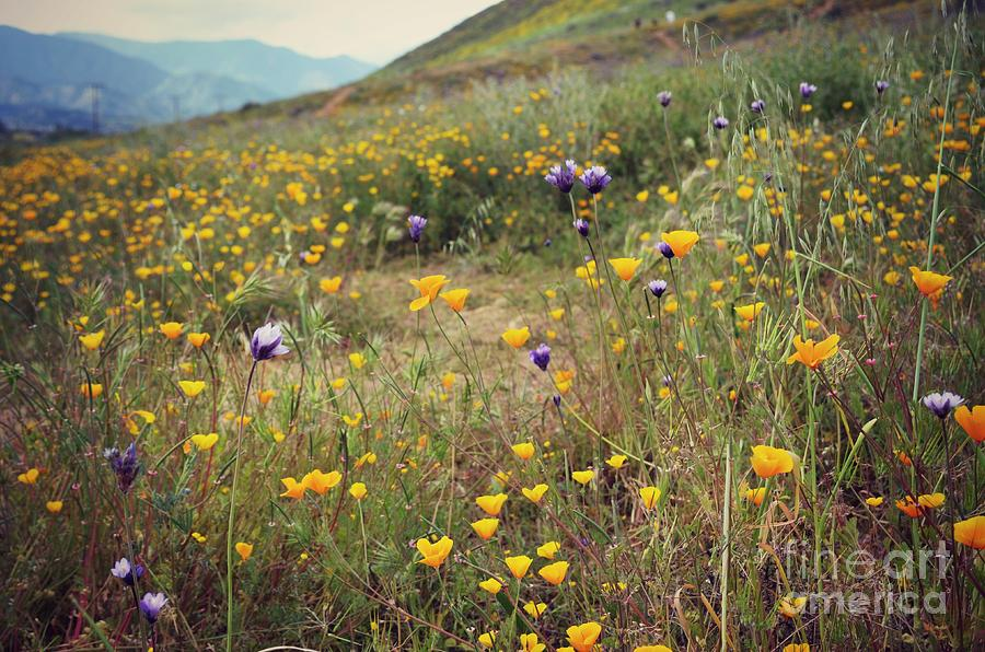 Super Bloom Photograph - Super Bloom by Kiana Carr