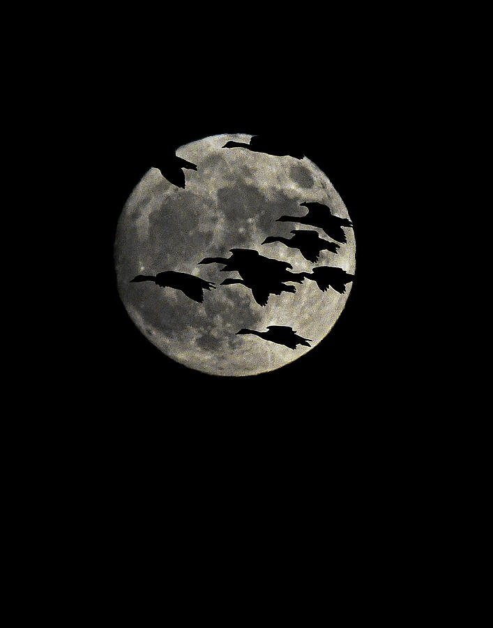 Super Moon Geese Transit by William Jobes