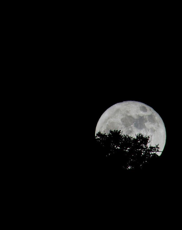 Super Moon Rising 11-14-2016 Photograph