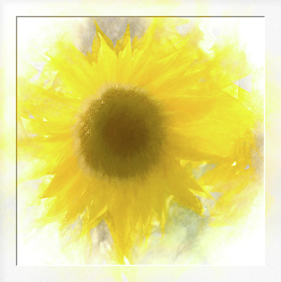 Super soft Sunflower by Natalie Rotman Cote