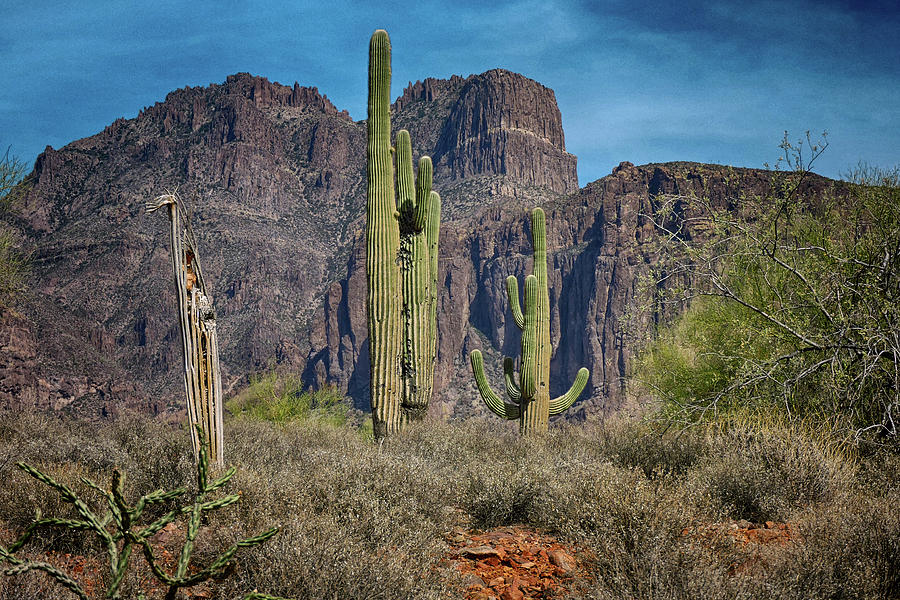 Superstition Mountain with Cactus by Grace Dillon