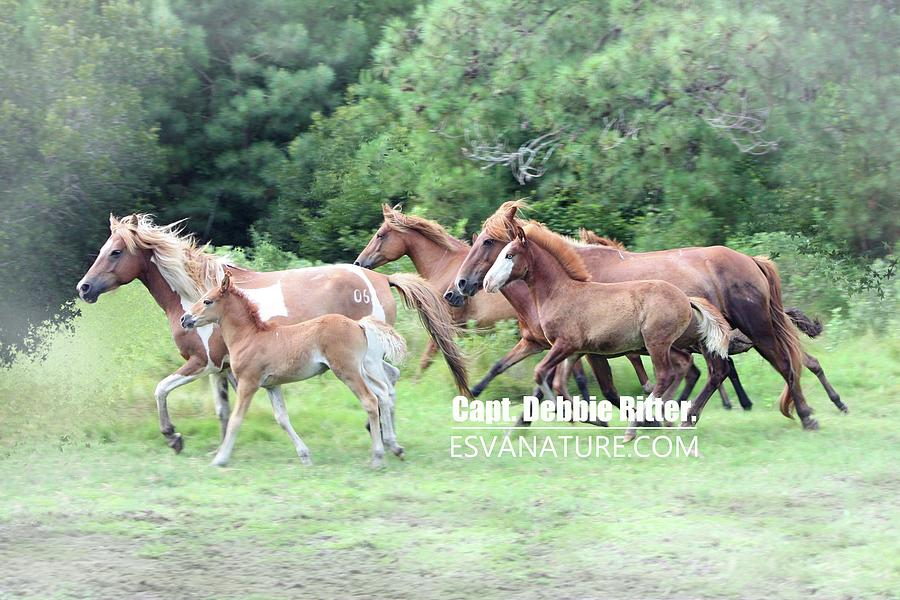 Wild Horses Photograph - Surf Queen And Soul Surfer by Captain Debbie Ritter