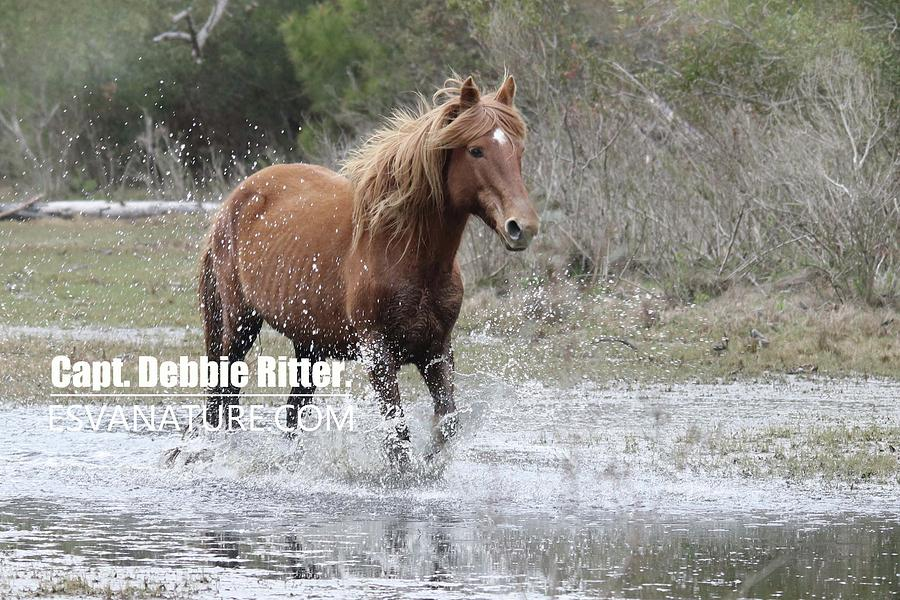 Wild Horse Photograph - Surf Queen Water by Captain Debbie Ritter
