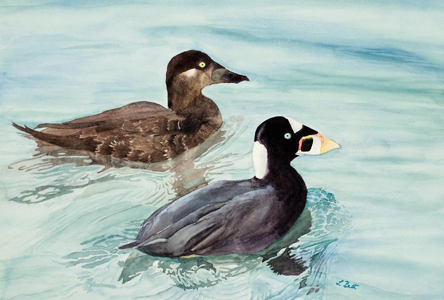 Surf Painting - Surf Scoter Ducks by Laurel Best