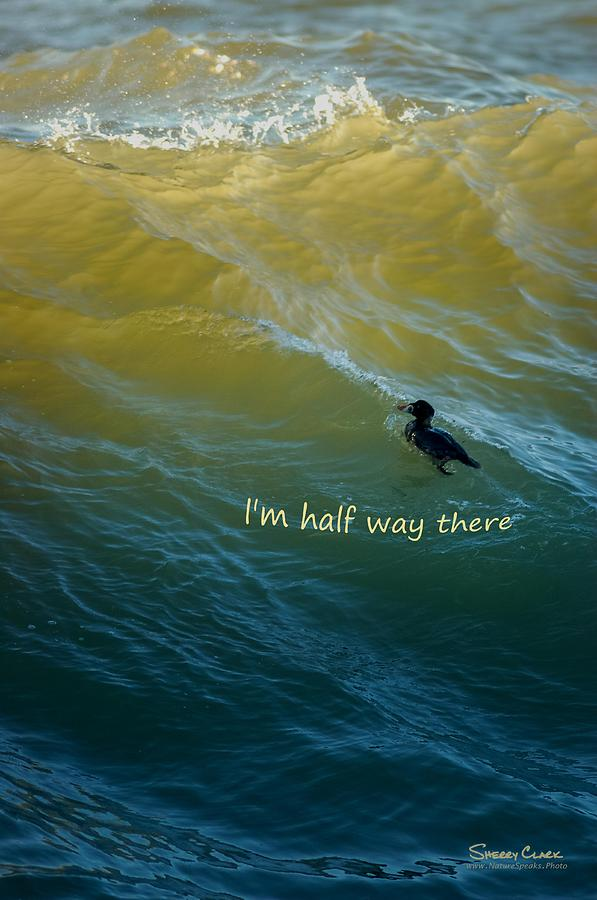 Surf Scoter says Im Half Way There Photograph by Sherry Clark