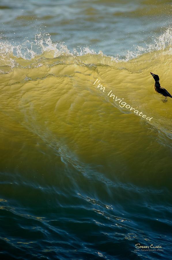Surf Scoter says Im Invigorated Photograph by Sherry Clark