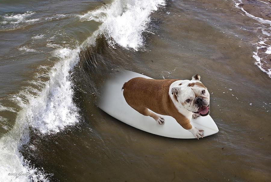 Bulldog Photograph - Surfer Dog by John A Rodriguez