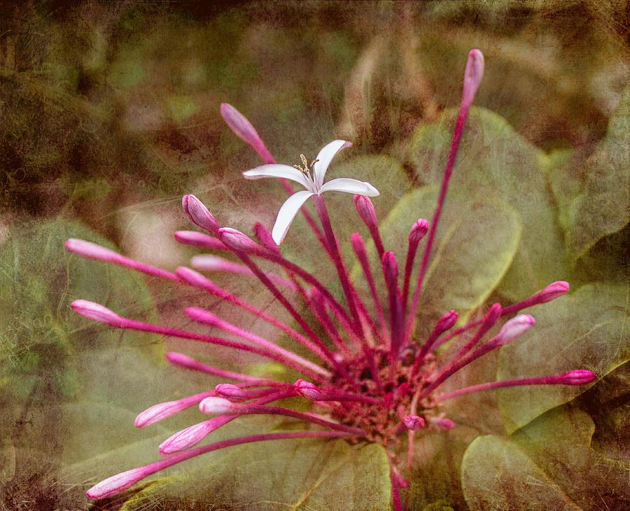 Pink Photograph - Surprise by Arlene Carmel
