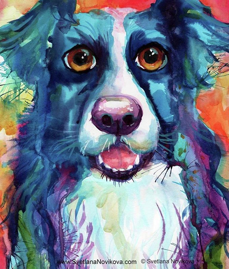 Bordercollies Photograph - Surprised Border Collie Watercolor by Svetlana Novikova
