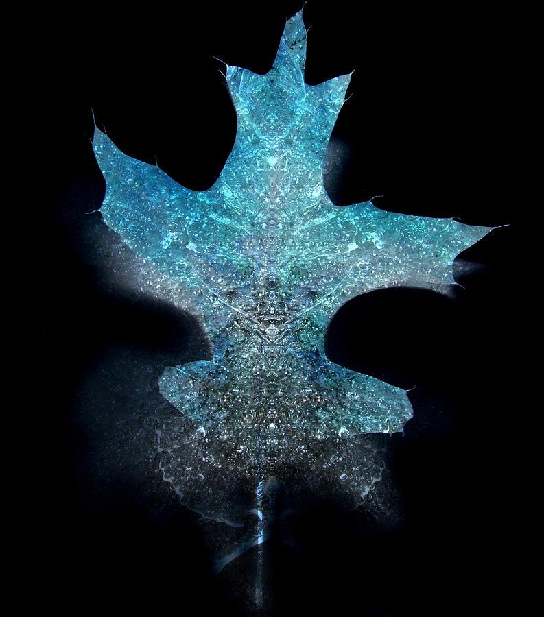 Surreal Ice Leaf Photograph