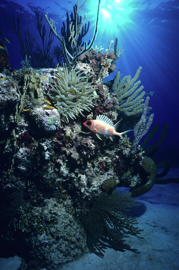 Caribbean Sea Photograph - Surreal Reef Collage by Don Kreuter