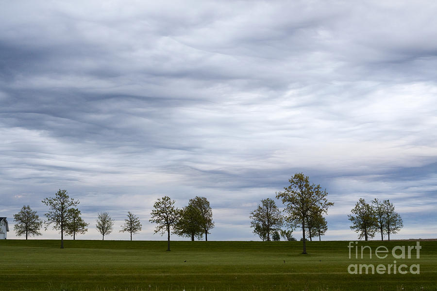 Surreal Photograph - Surreal Trees and Cloudscape by Sharon Foelz