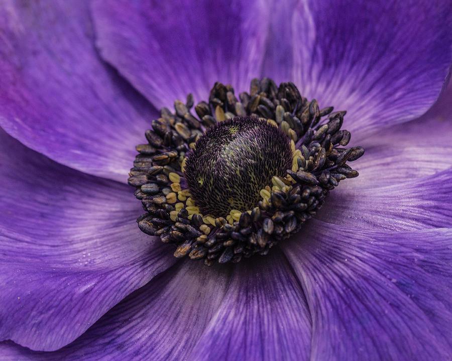 Purple Photograph - Surround Me by Julie Andel