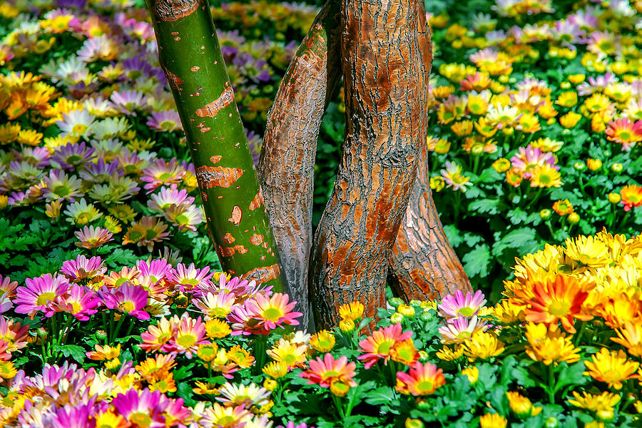 Spring Flowers Photograph - Surrounded by Az Jackson