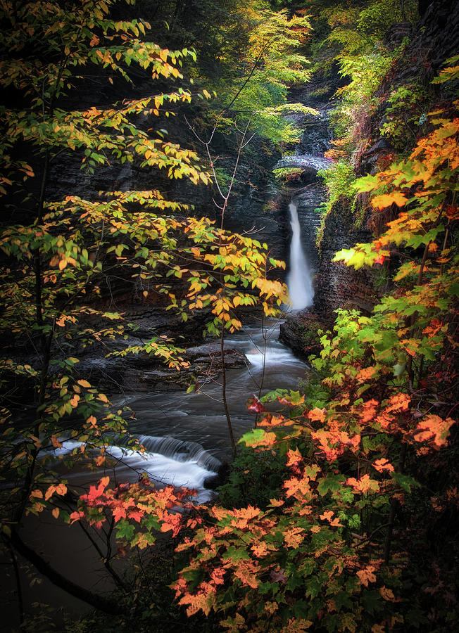 Ithaca Photograph - Surrounded By Fall by Neil Shapiro