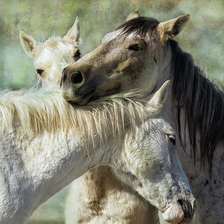 Surrounded by Love by Belinda Greb