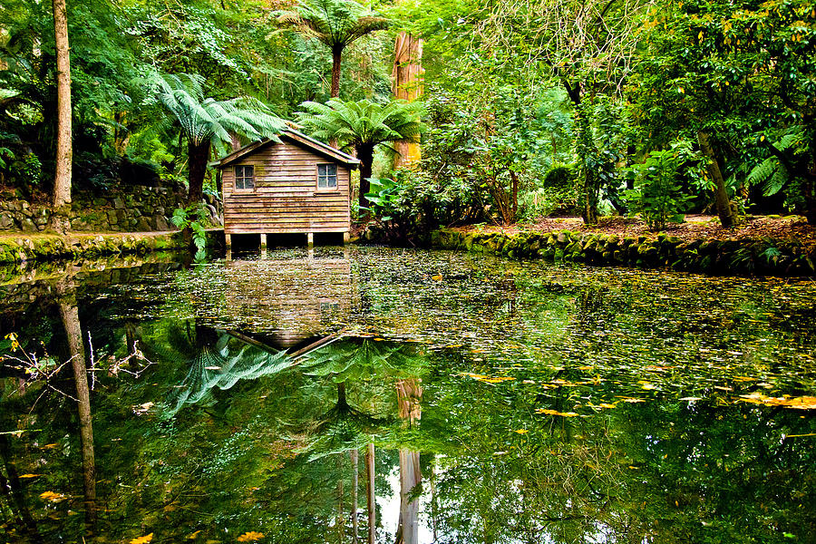 Dandenong Photograph - Surrounded By Nature by Az Jackson