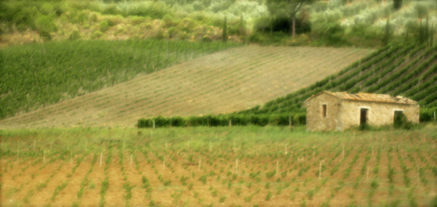 Italy Photograph - Surrounded By Vineyards by Vicki Hone Smith