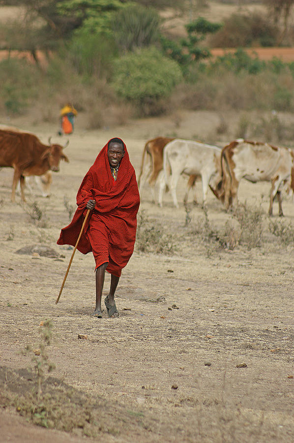 Maasai Photograph - Surveying The Herd by Robert Kenny