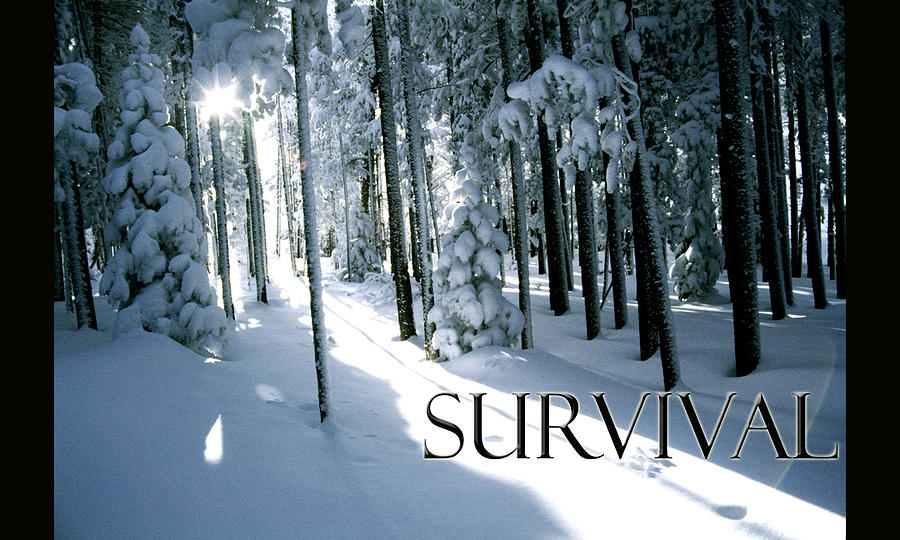 Mountain Photograph - Survival by Kyle Schmierer