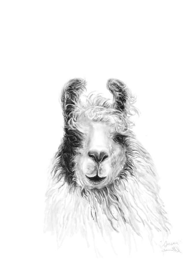 Llamas Drawing - Susan by K Llamas