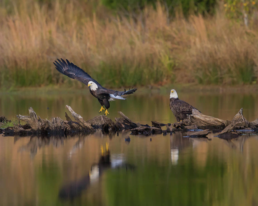 Eagles Photograph - Suspended Time by Rhoda Gerig
