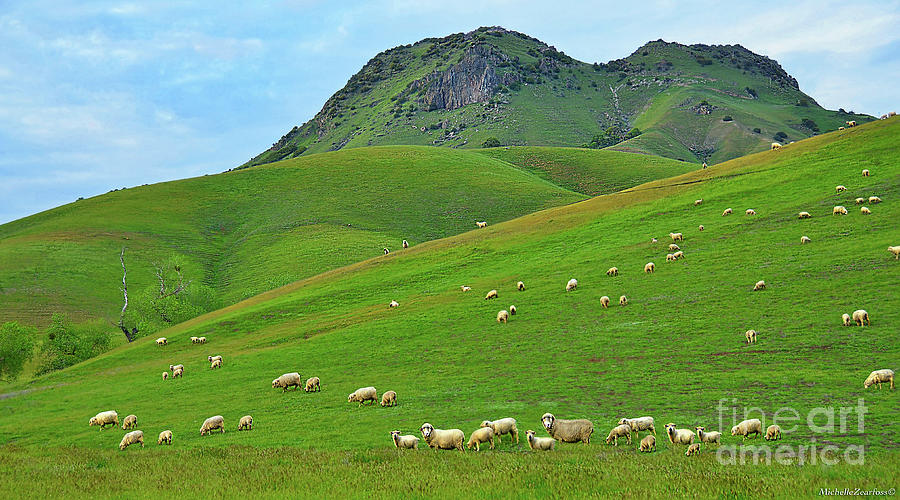 Sutter Buttes Photograph - Sutter Buttes And Grazing Sheep by Michelle Zearfoss