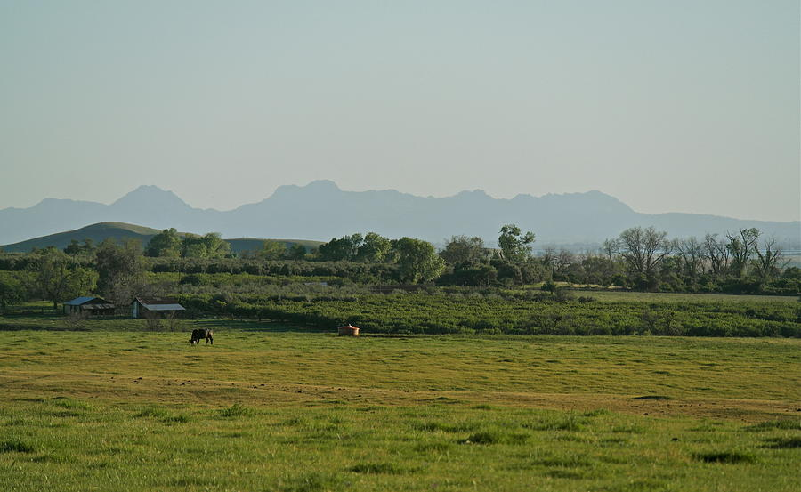Sutter Buttes Country  by Michele Myers