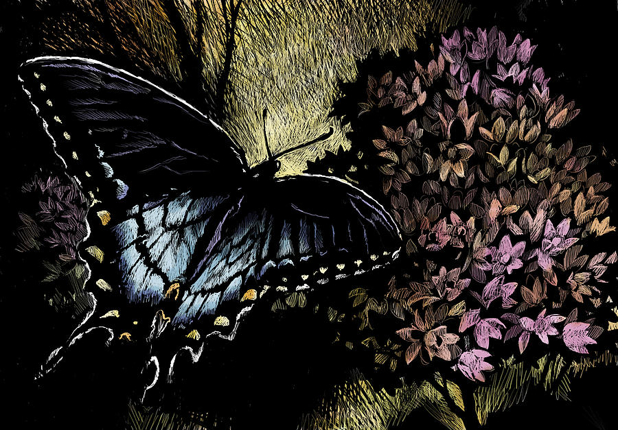 Butterfly Drawing - Swallowtail 1 by Laurie Musser
