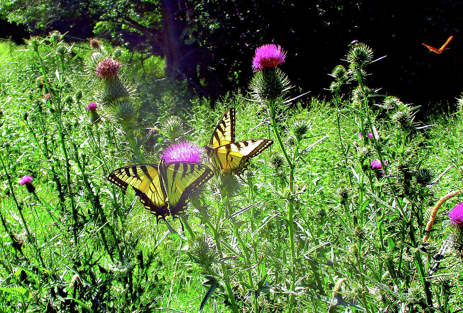 Swallowtail Butterflies And Company by Patricia Keller