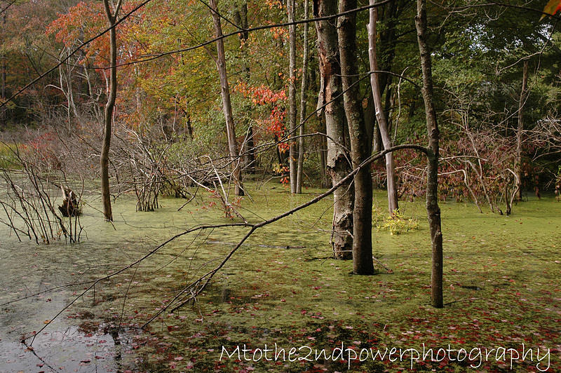Swamp Photograph - Swamp Beauty by Megen McAuliffe