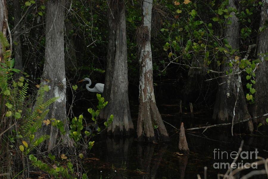 Swamp Bird by Jim Goodman