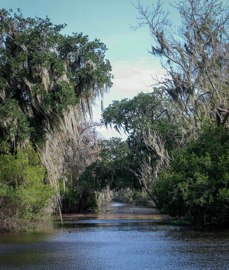 Bridge Photograph - Swamp by Crewdson Photography