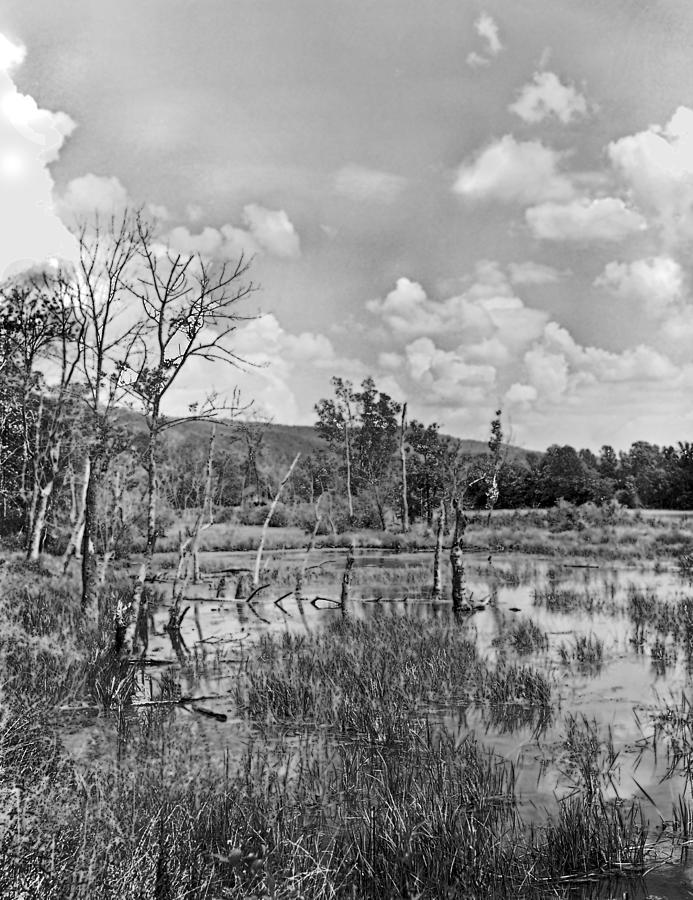 Ansel Adams Photograph - Swamp by Curtis J Neeley Jr