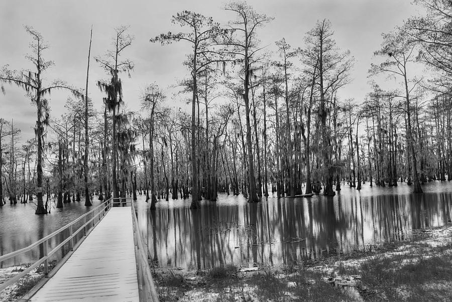 Swamp Photograph - Swamp Dock Black And White by Ester McGuire