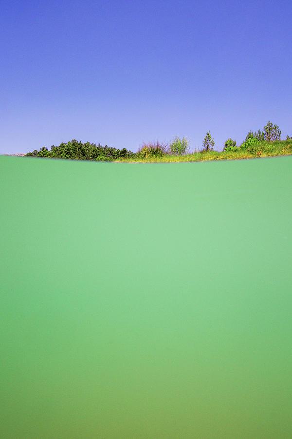 Swim Photograph - Swamp by Gemma Silvestre