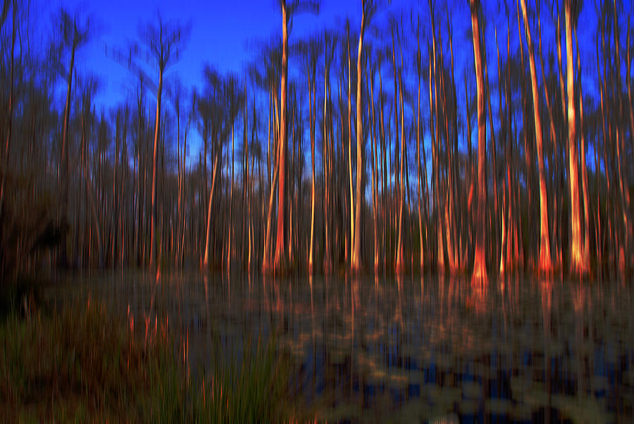 Swamp In Cypress Gardens Photograph
