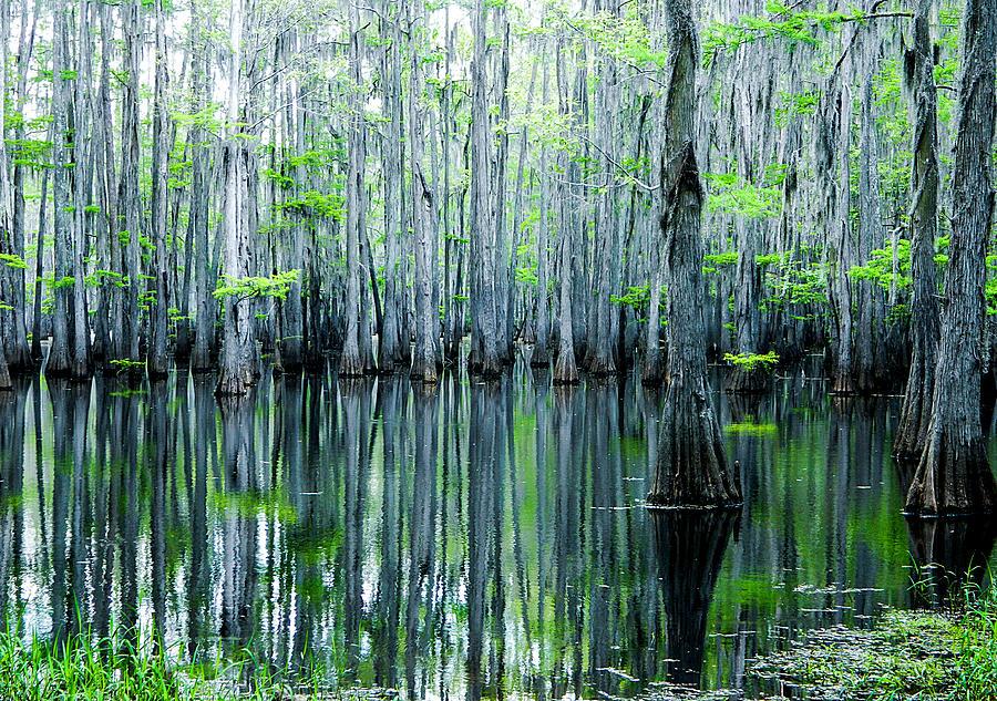 Algae Photograph - Swamp in Louisiana by Ester McGuire
