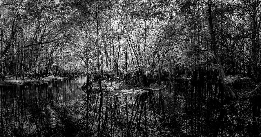 Swamp Photograph - Swamp Island by Marvin Spates